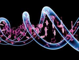 DNA Teleportation?